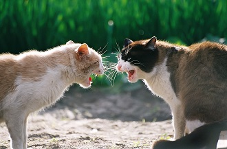 Gatos peleando (HD)