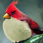 angry bird documental