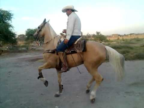 antonio aguilar caballo as de oro